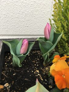 北長尾に春が来た!(平成30年3月11日)