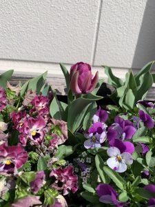 苑庭のお花(令和3年4月4日)